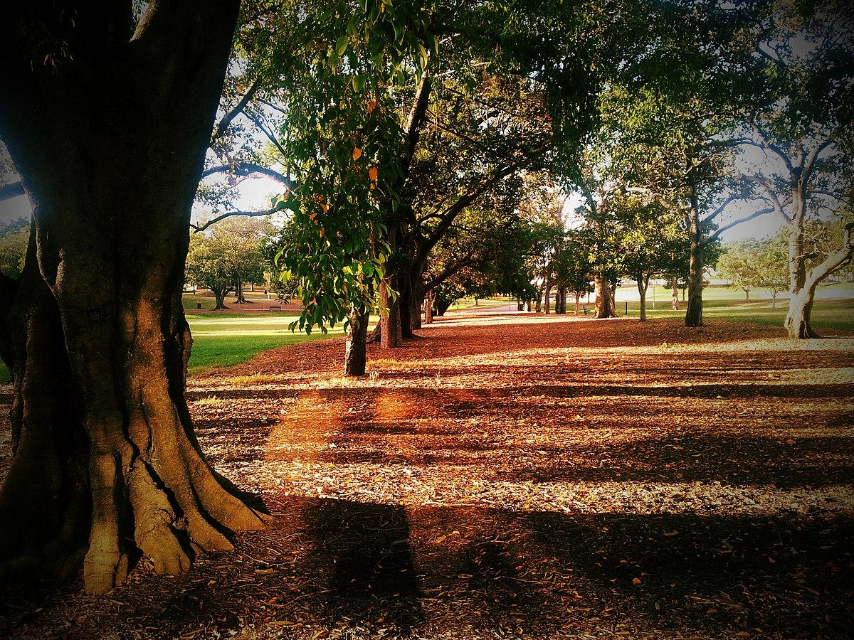 Musgrave Park Brisbane Wikipedia