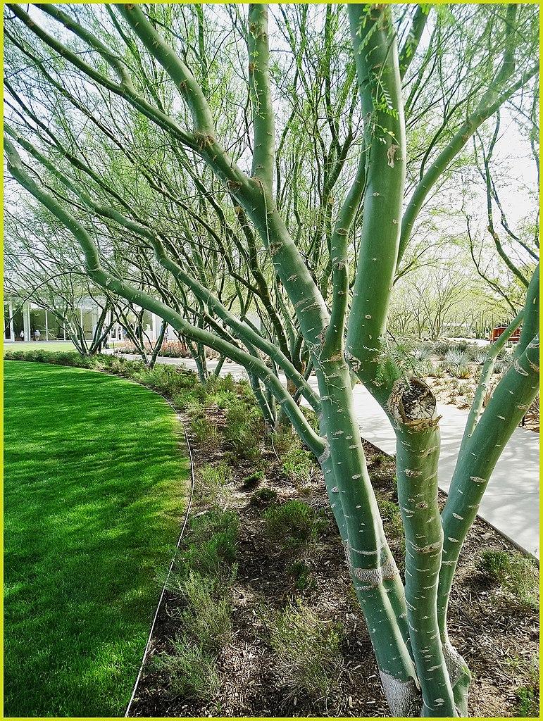 Gardens In Palm Springs Ca