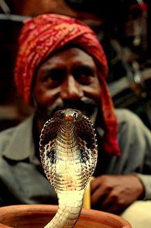 Snakes Wikiquote
