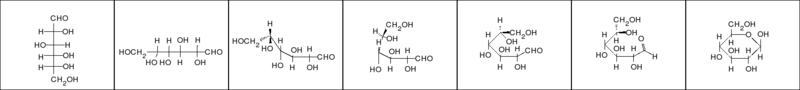 Haworth Galactose D Projections
