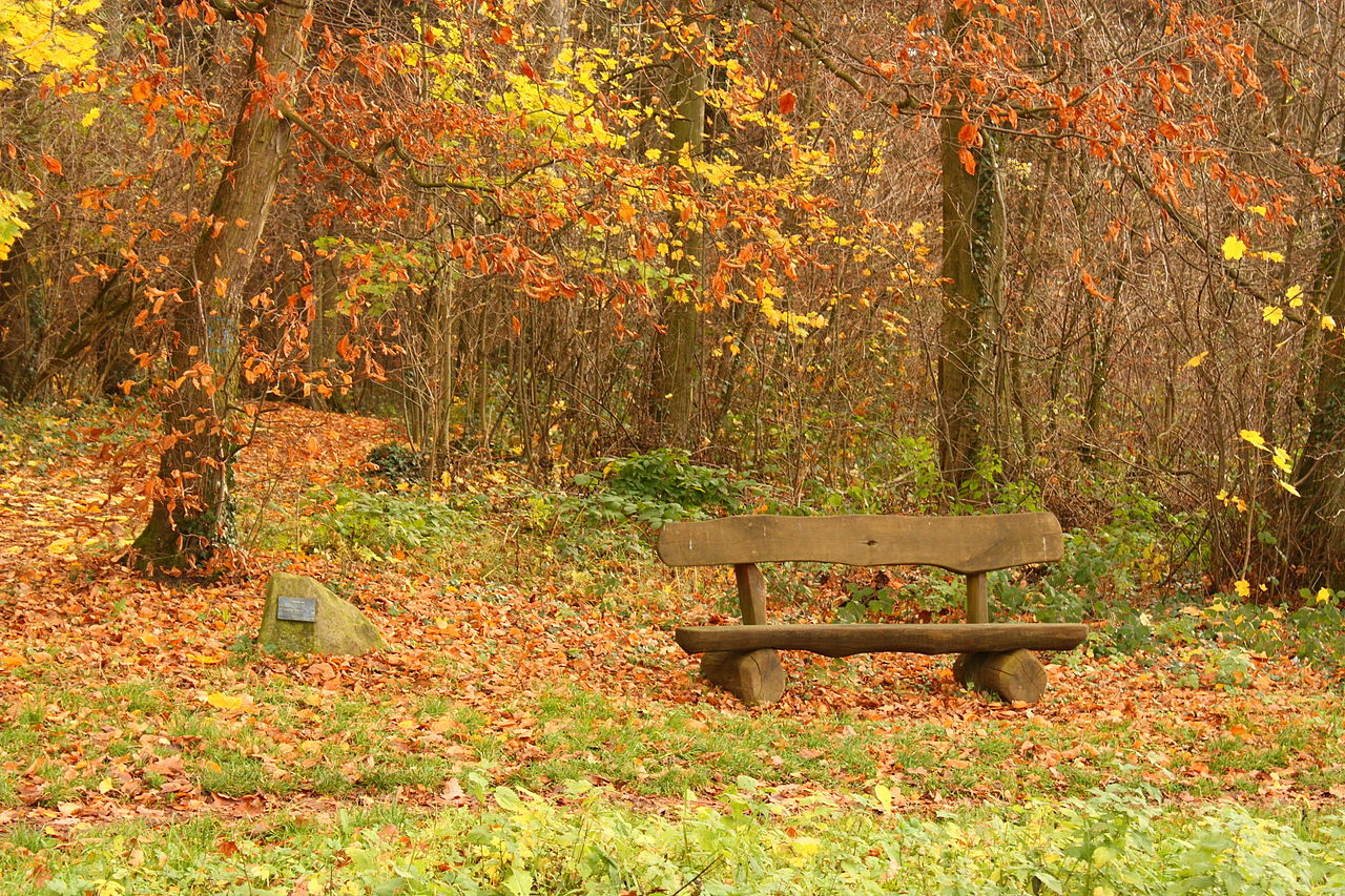 File Bench Forest Heidelberg Jpg Wikimedia Commons