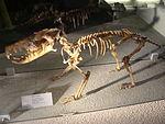 Island gigantism - Wikipedia