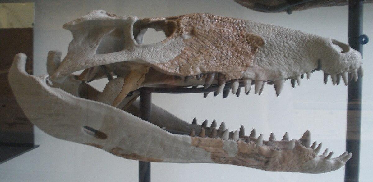 Crocodylomorpha Wikipedia
