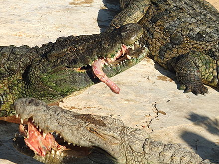 man eaten by crocodile - HD 2816×2112