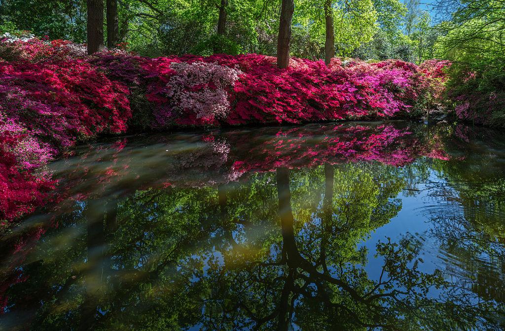 File Still Pond 2 Isabella Plantation Richmond Park