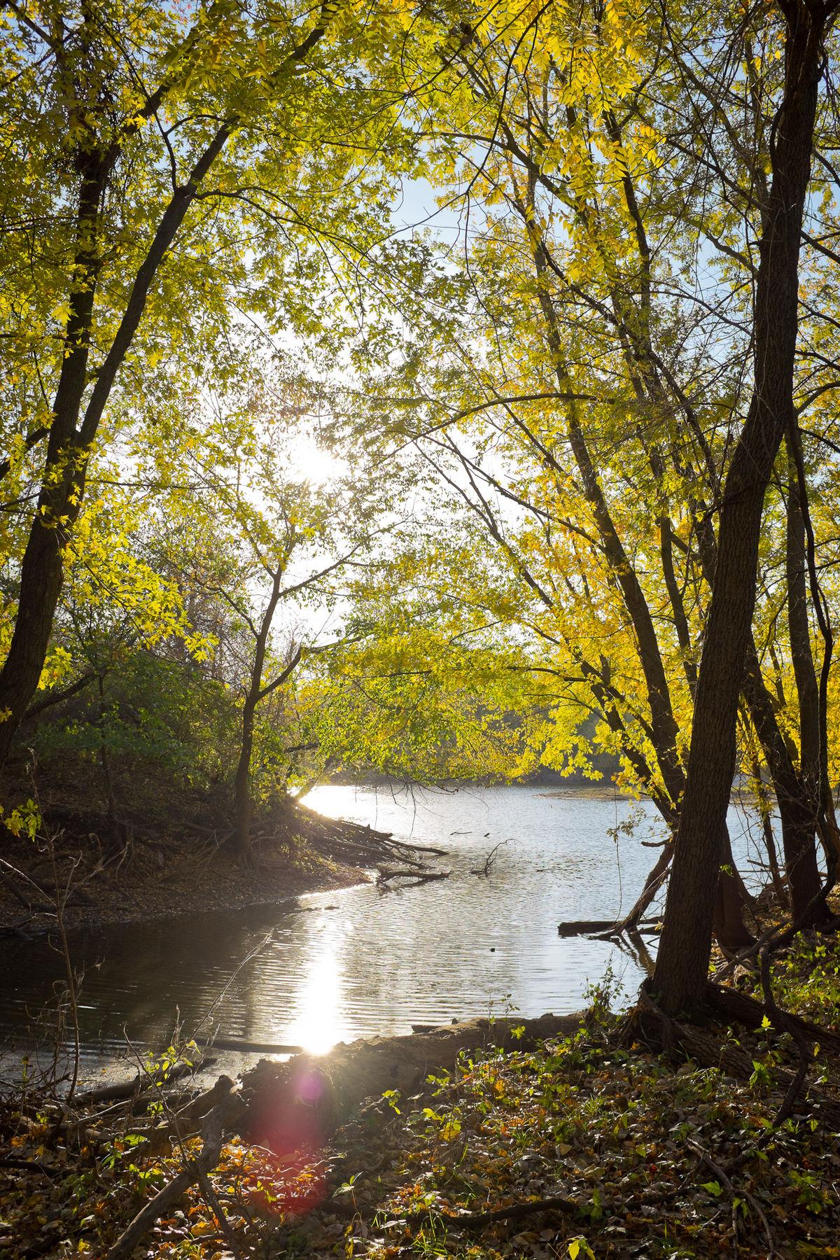 Trail Forest Blogs Black