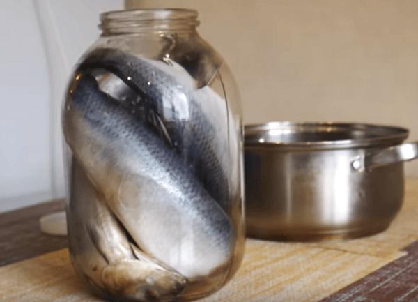 Sett fisk i en krukke