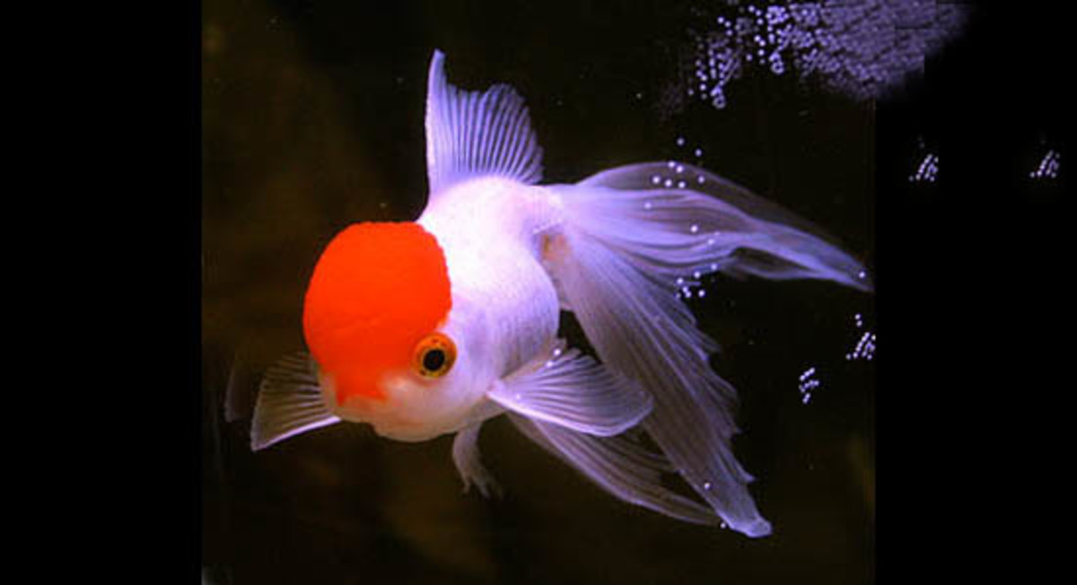 Fish Light Its Head