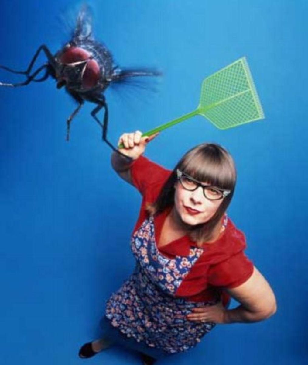 Fleas How Rid Get Indoors