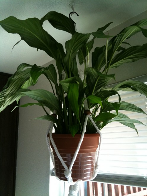 Best Houseplants Grow