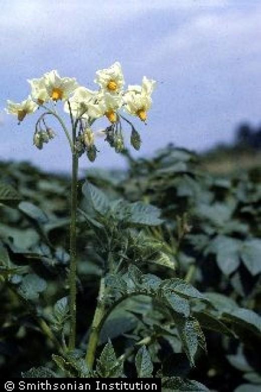 Best Garden Soil Mixture