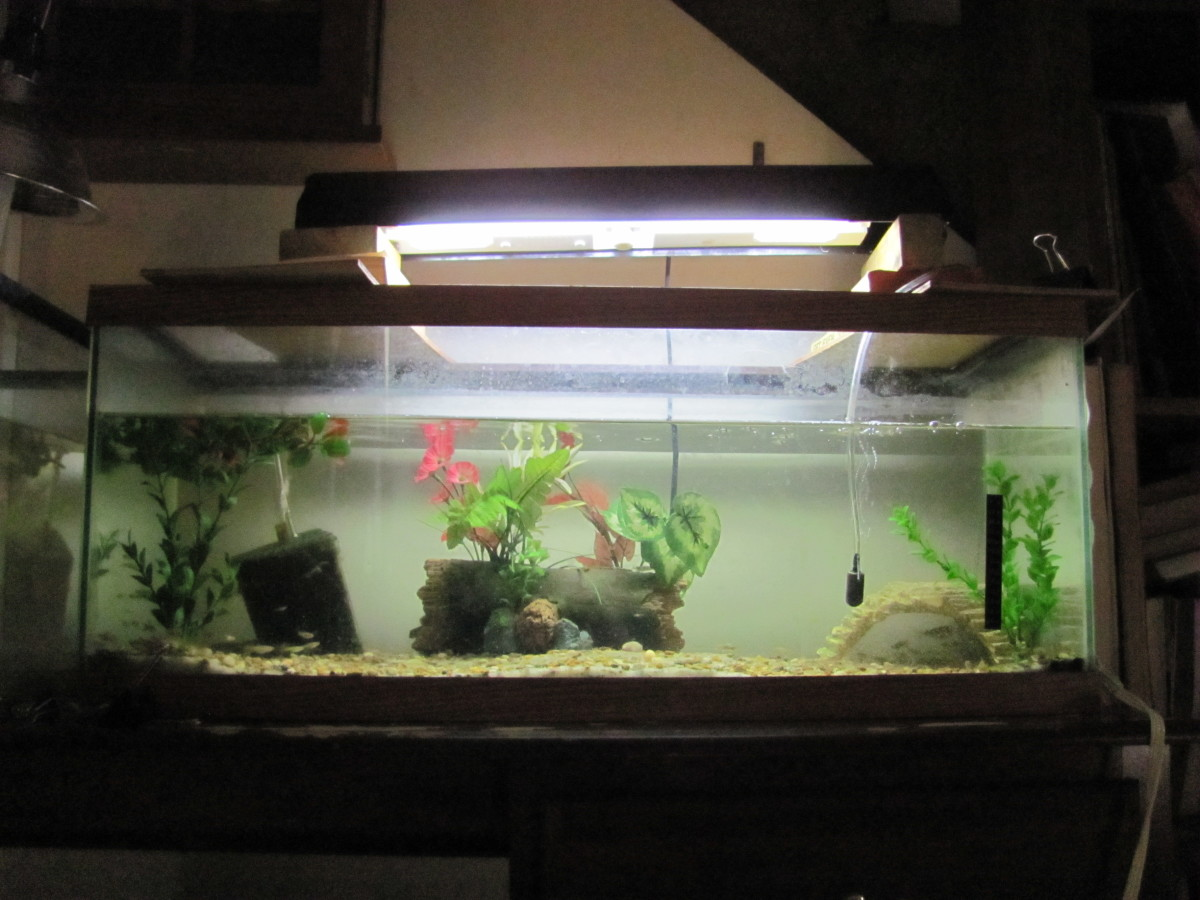 Why Are Glass Aquariums So Expensive Pethelpful