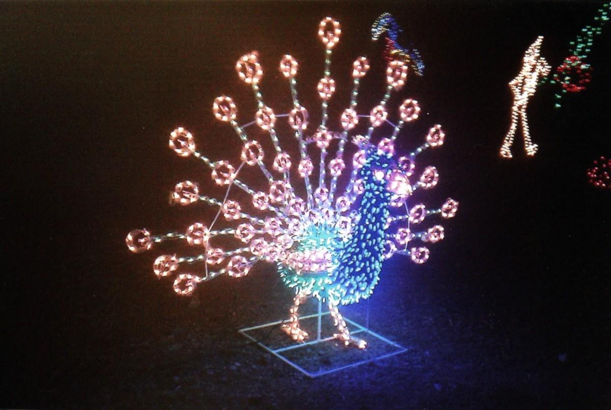 Zoo Light Hours Phoenix