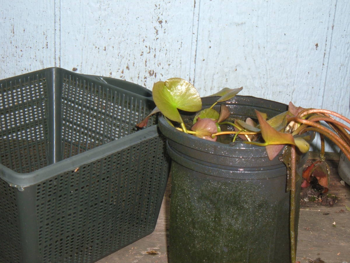 Tall Narrow Plant Pots
