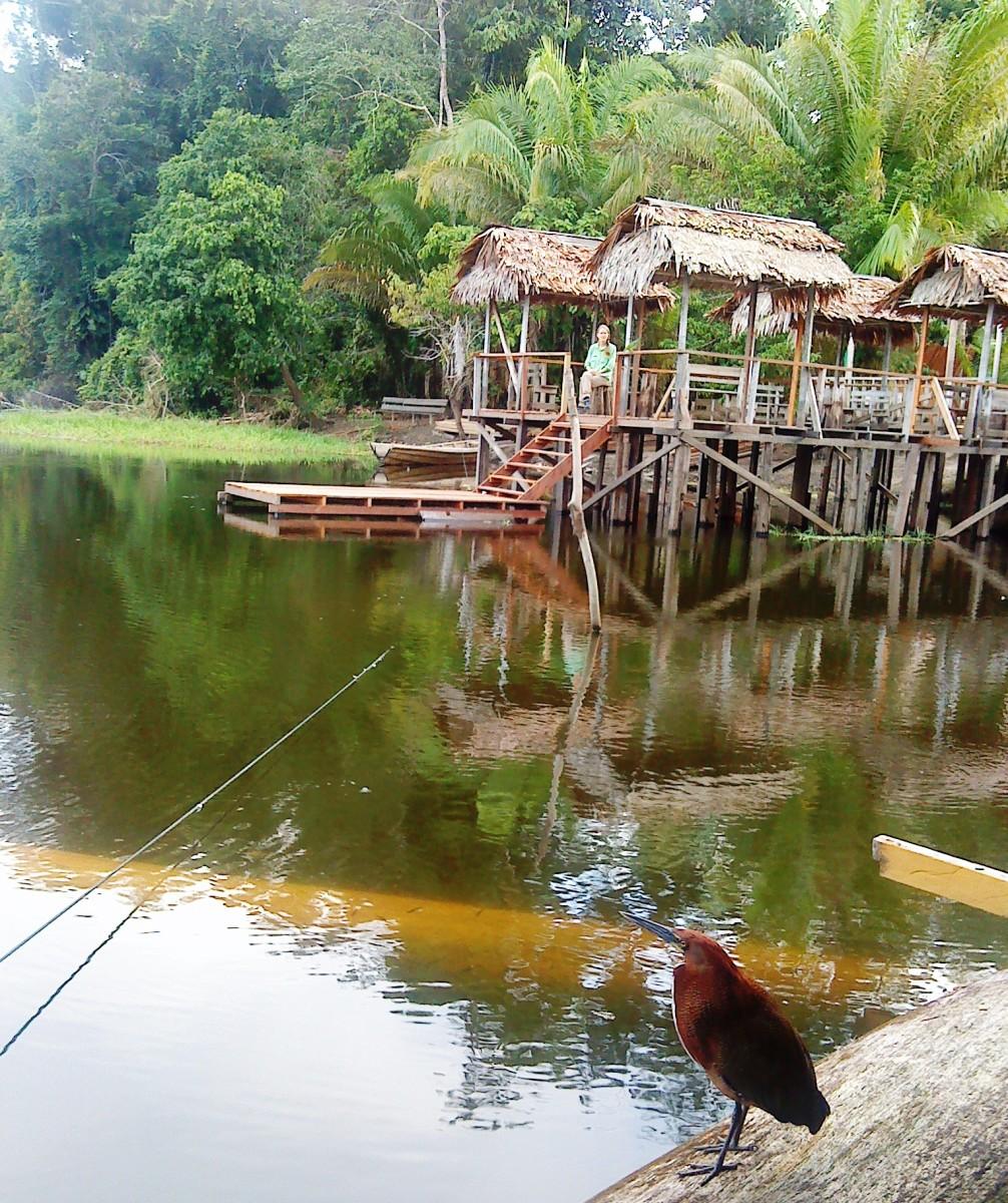 amazon rainforest location - HD1024×1222
