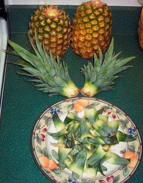 Плоды и стебли ананаса, листья на блюде