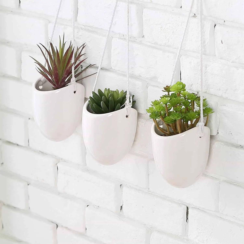 Succulent Plants Ikea