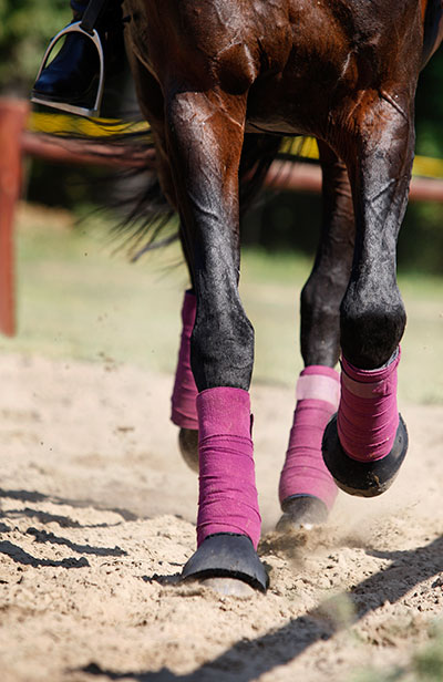 Joint Problems In Horses Arthritis Djd Prevention Amp Relief