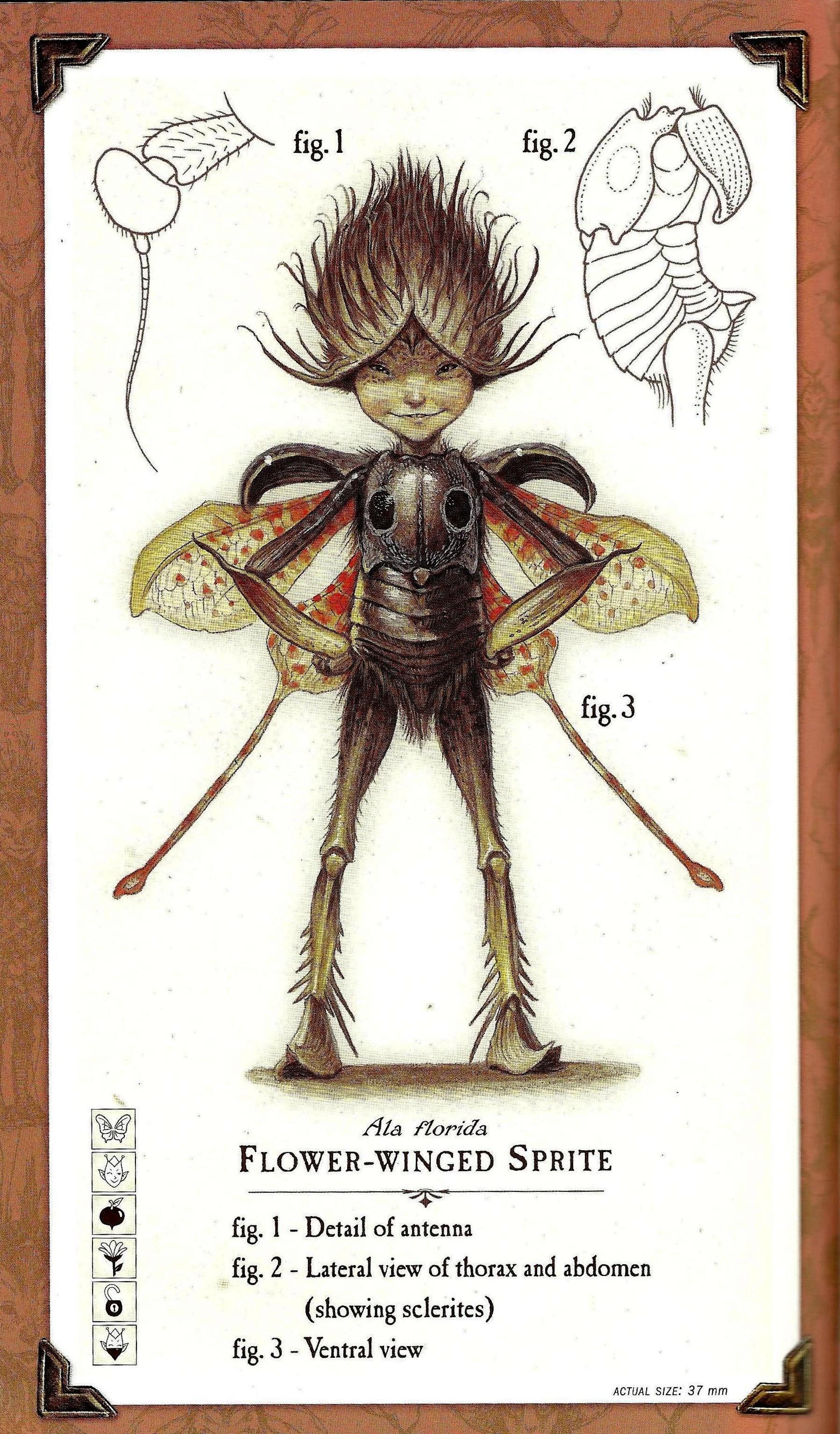 Sprite Creature Spiderwick