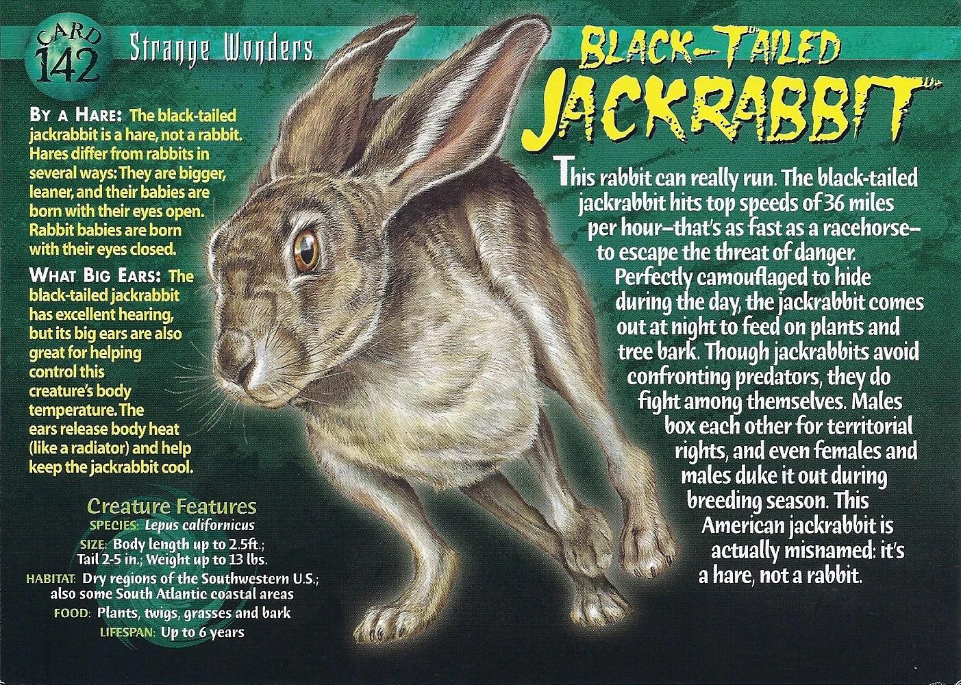 Weird N Wild Creatures Monsters Mind