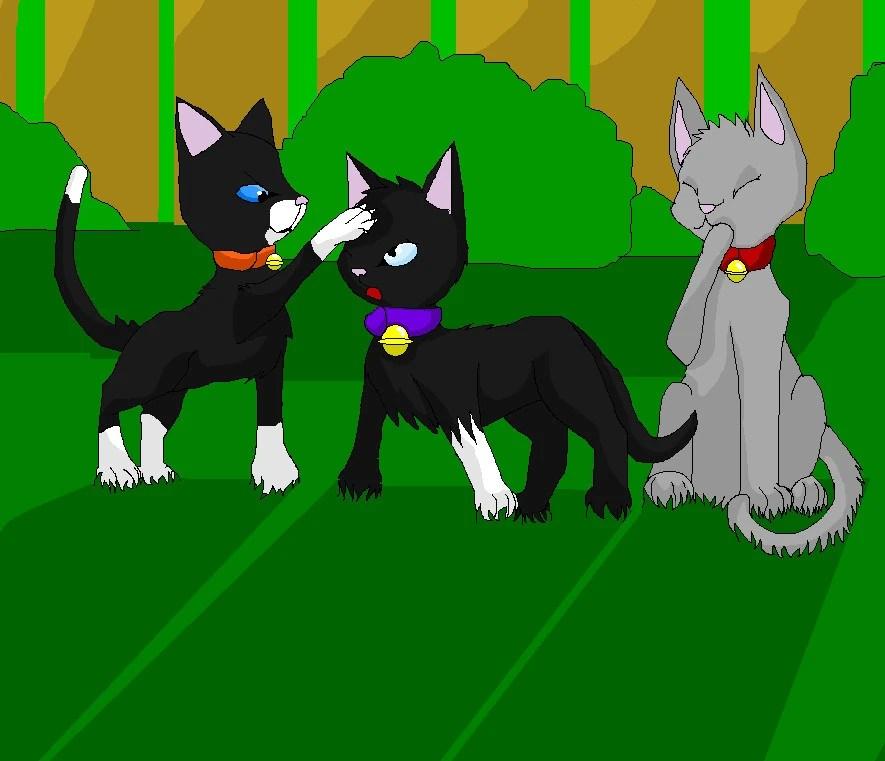 Socks Warrior Cats Alone