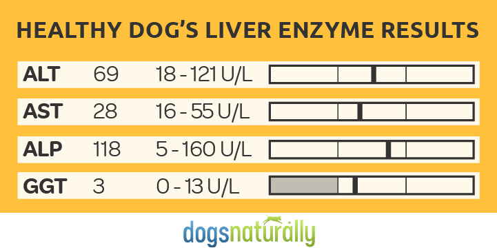 What That Liver Enzyme Test Is Telling You - Dogs Naturally