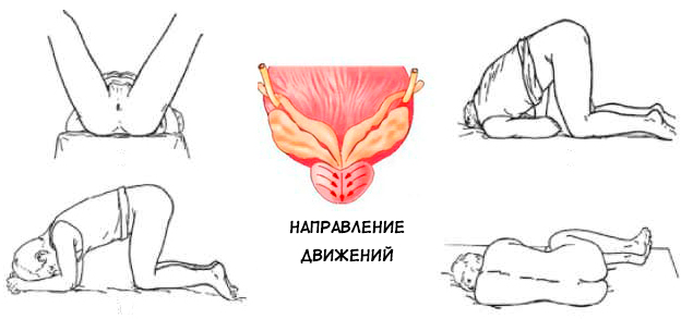 The scheme of movements, postures and technique of prostate massage