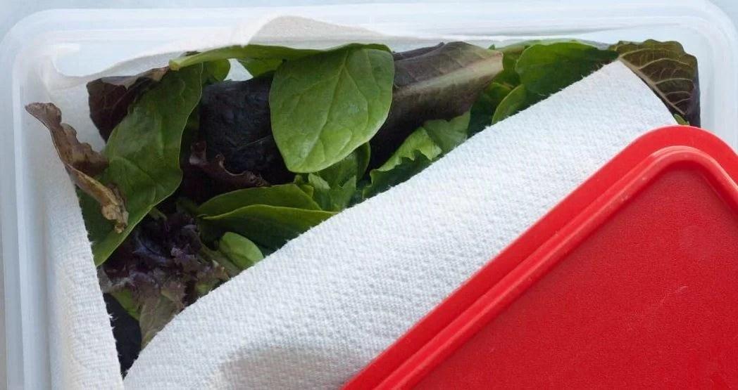 Как дольше сохранить зелень свежей в холодильнике в пластиковом контейнере с помощью бумажной салфетки