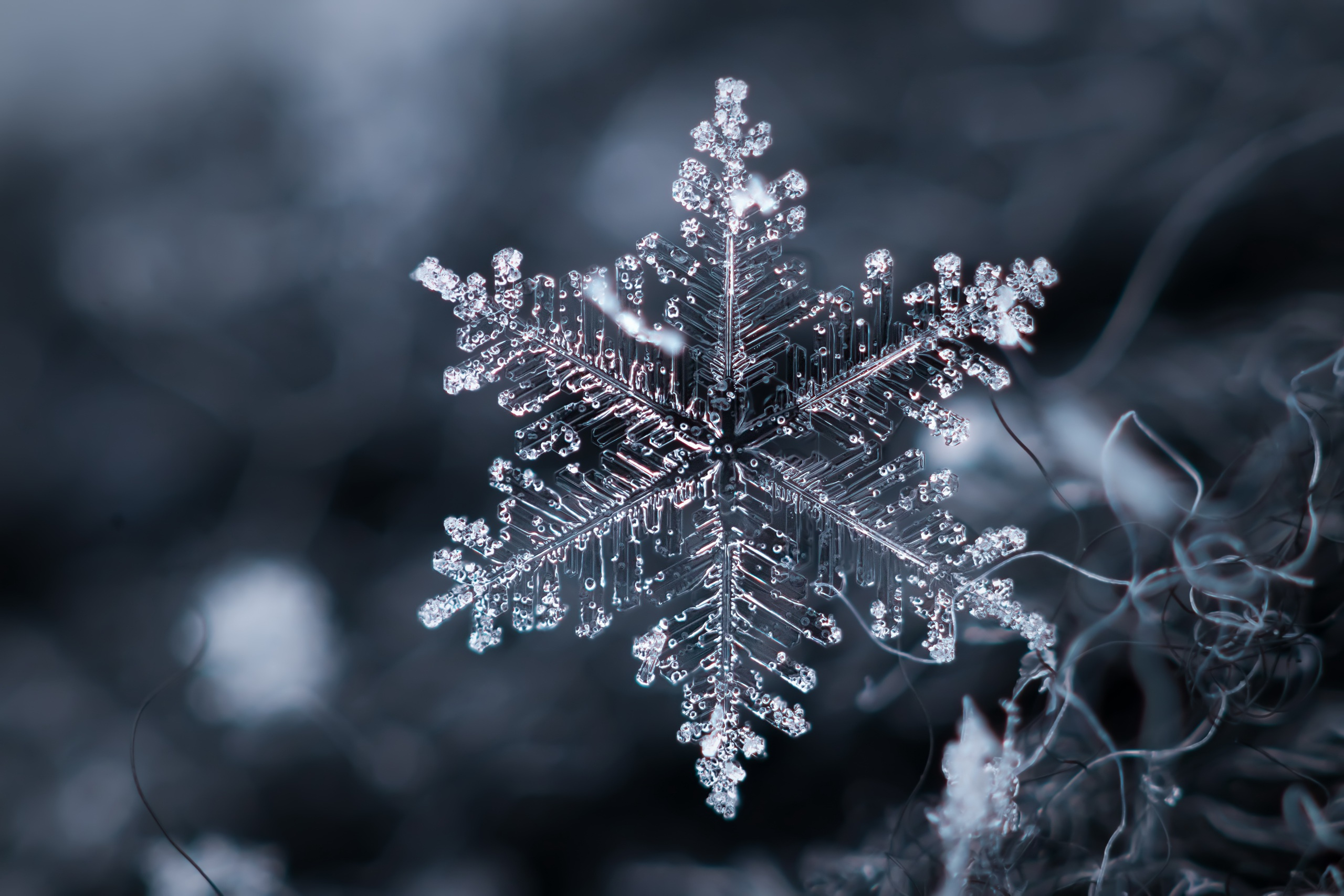 images of snowflakes - HD1600×1066