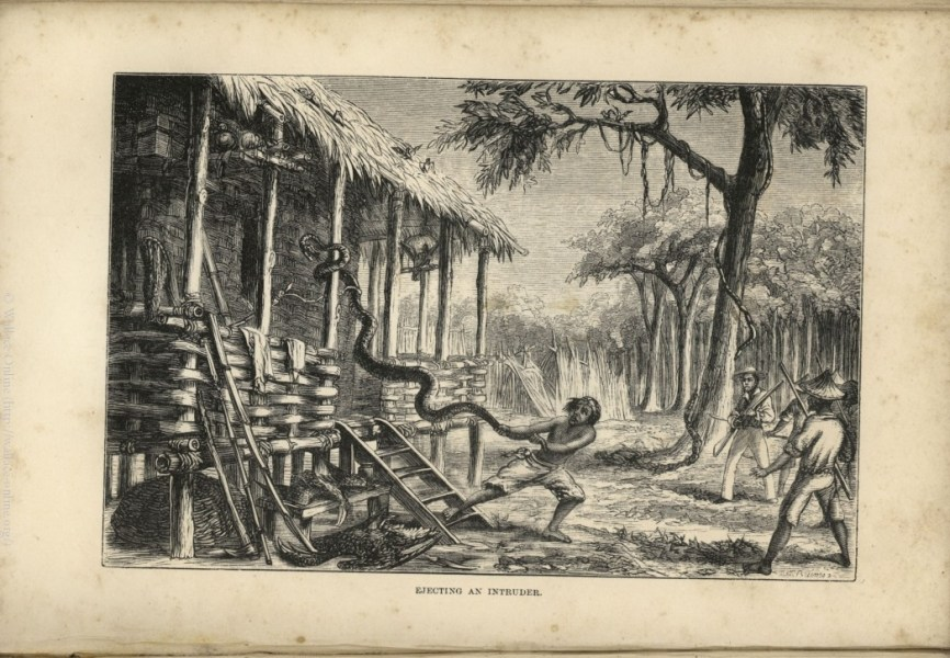Wallace  A  R  1869  The Malay Archipelago  The land of the orang     Wallace  A  R  1869  The Malay Archipelago  The land of the orang utan  and  the bird of paradise  A narrative of travel  with studies of man and nature