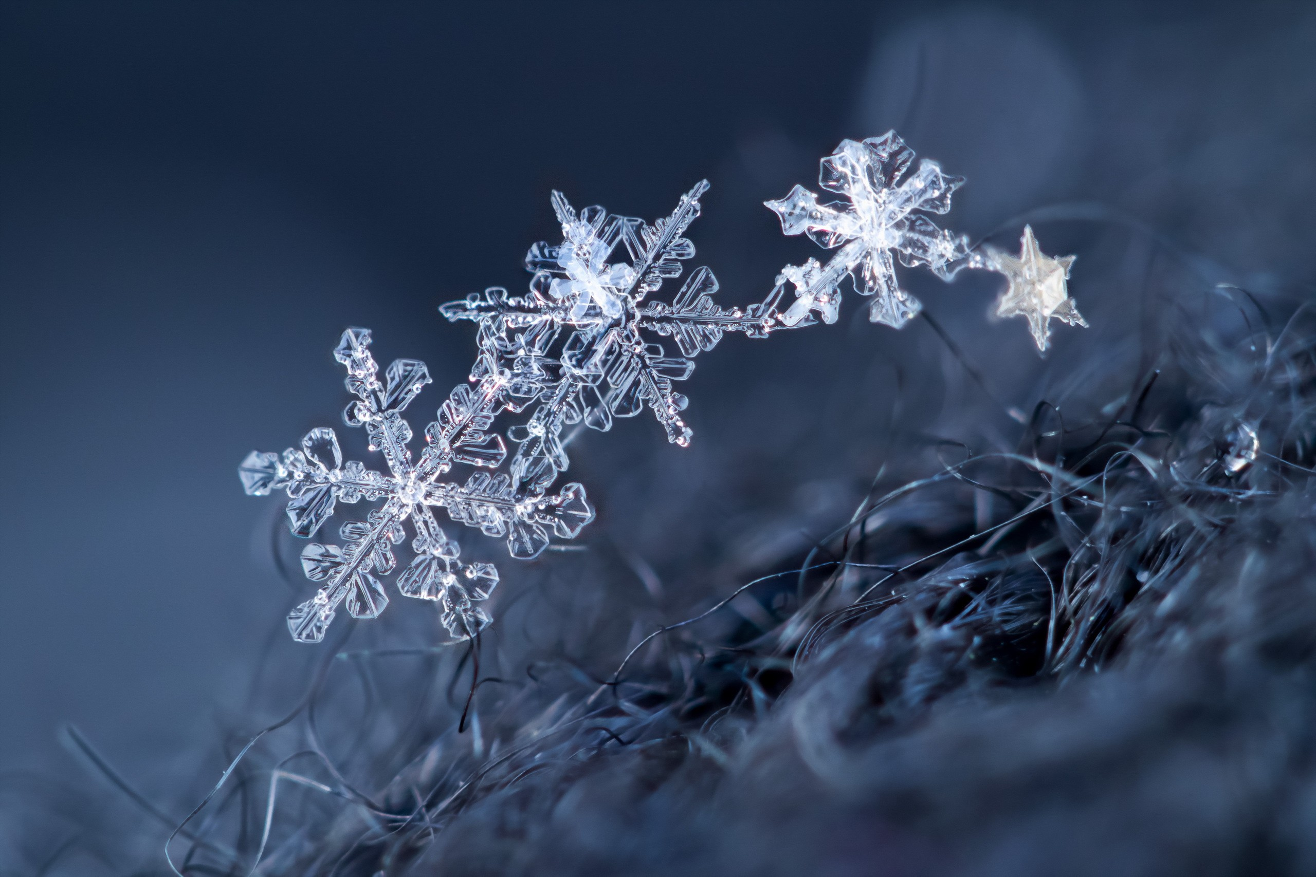 images of snowflakes - HD2560×1707