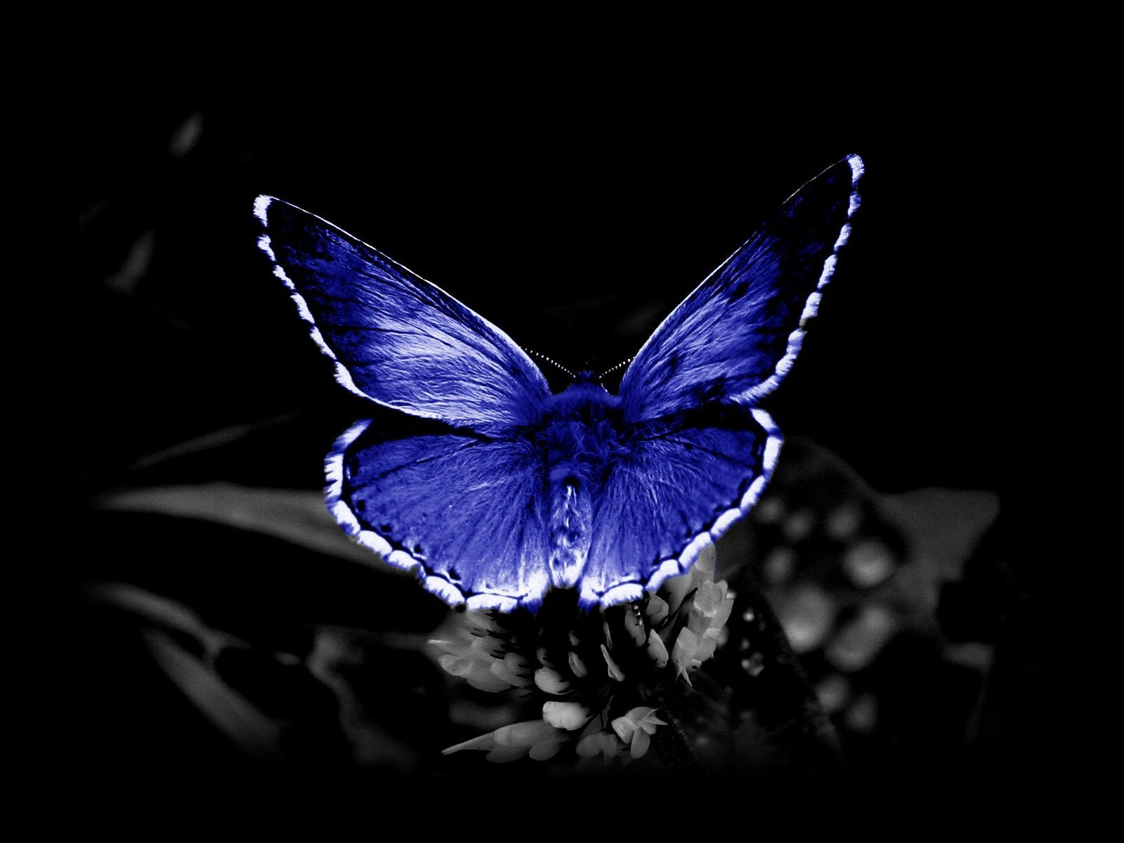 Butterfly Wallpapers Free Download Group  66   High Definition butterfly wallpaper for free download