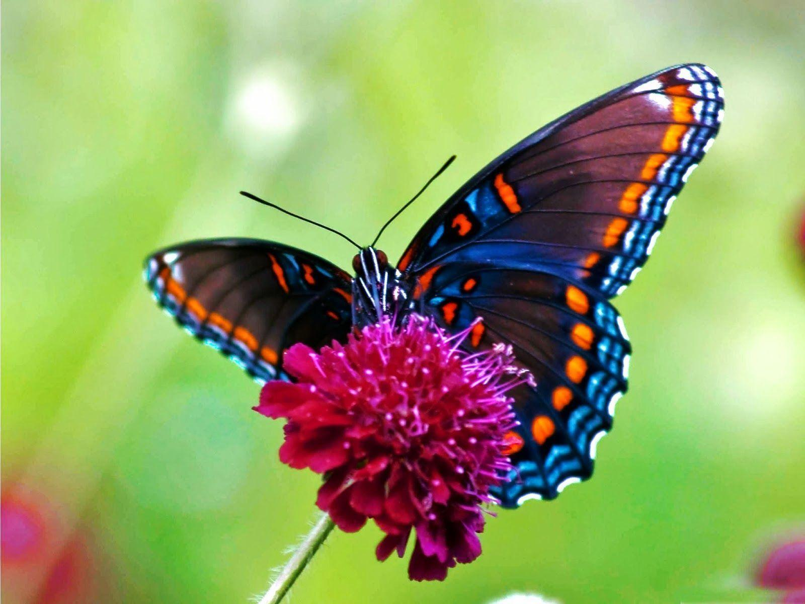 Free Butterfly Wallpapers   Wallpaper Cave Free Butterfly Wallpaper Downloads   coolstyle wallpapers
