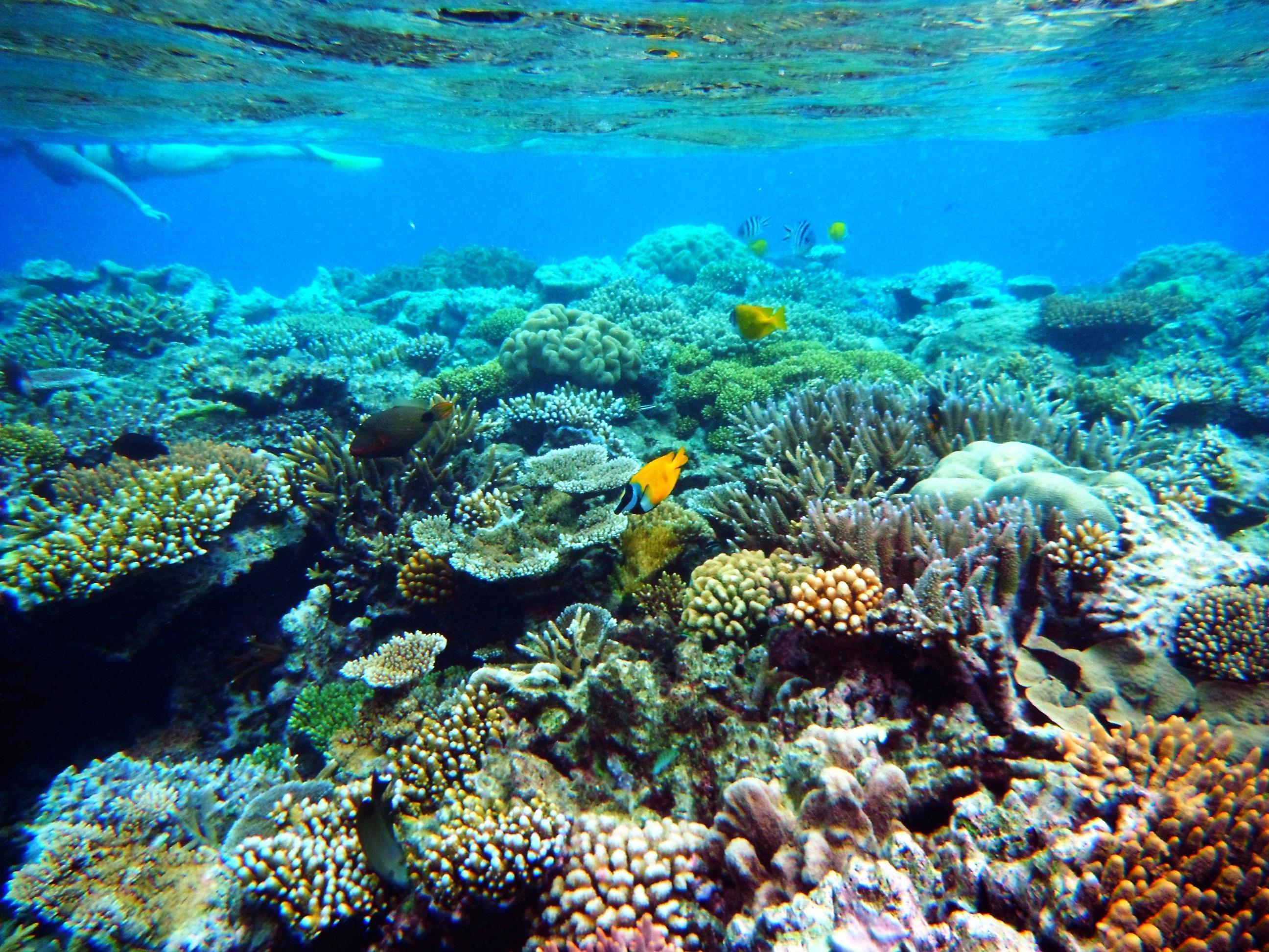 Great Barrier Reef Pictures Underwater