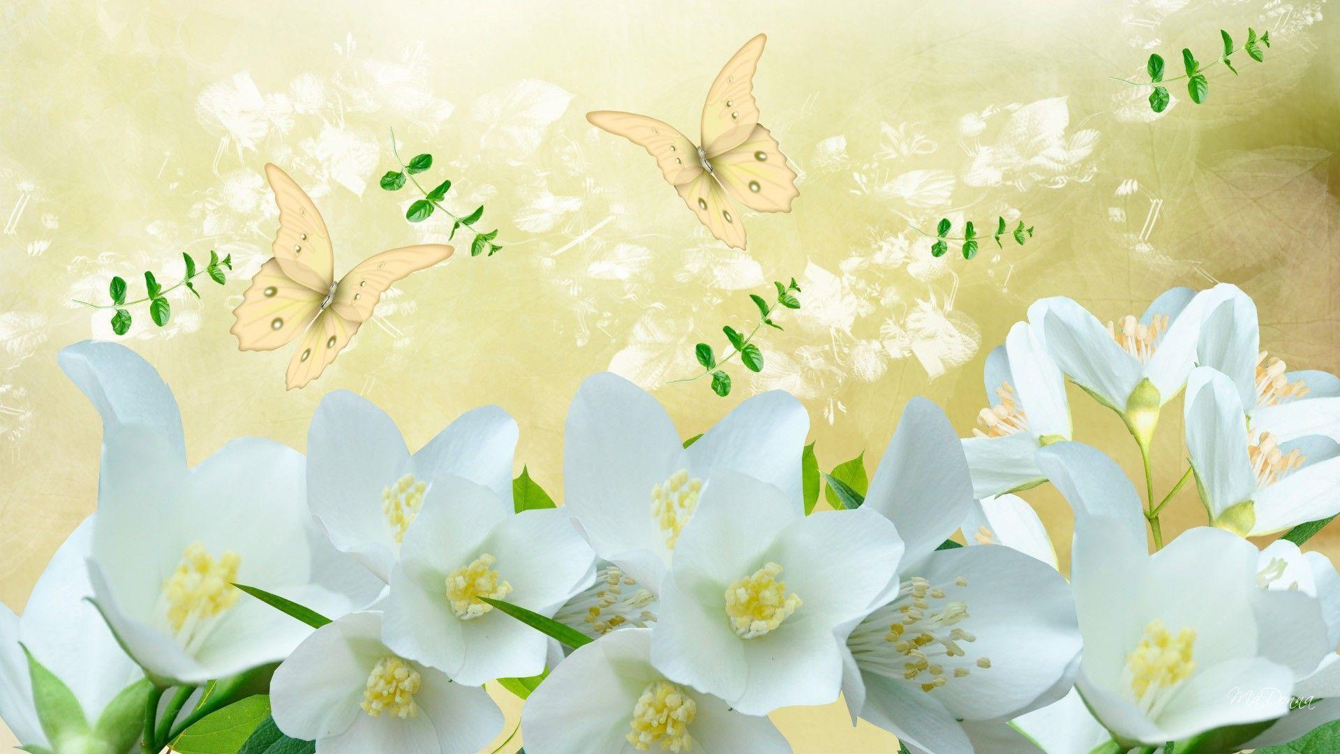 Jasmine Flower Wallpaper Desktop