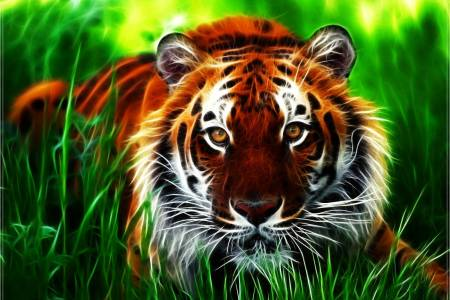 Tiger HD Wallpapers   Wallpaper Cave 3D Tiger HD Wallpaper   Wallpaper Download