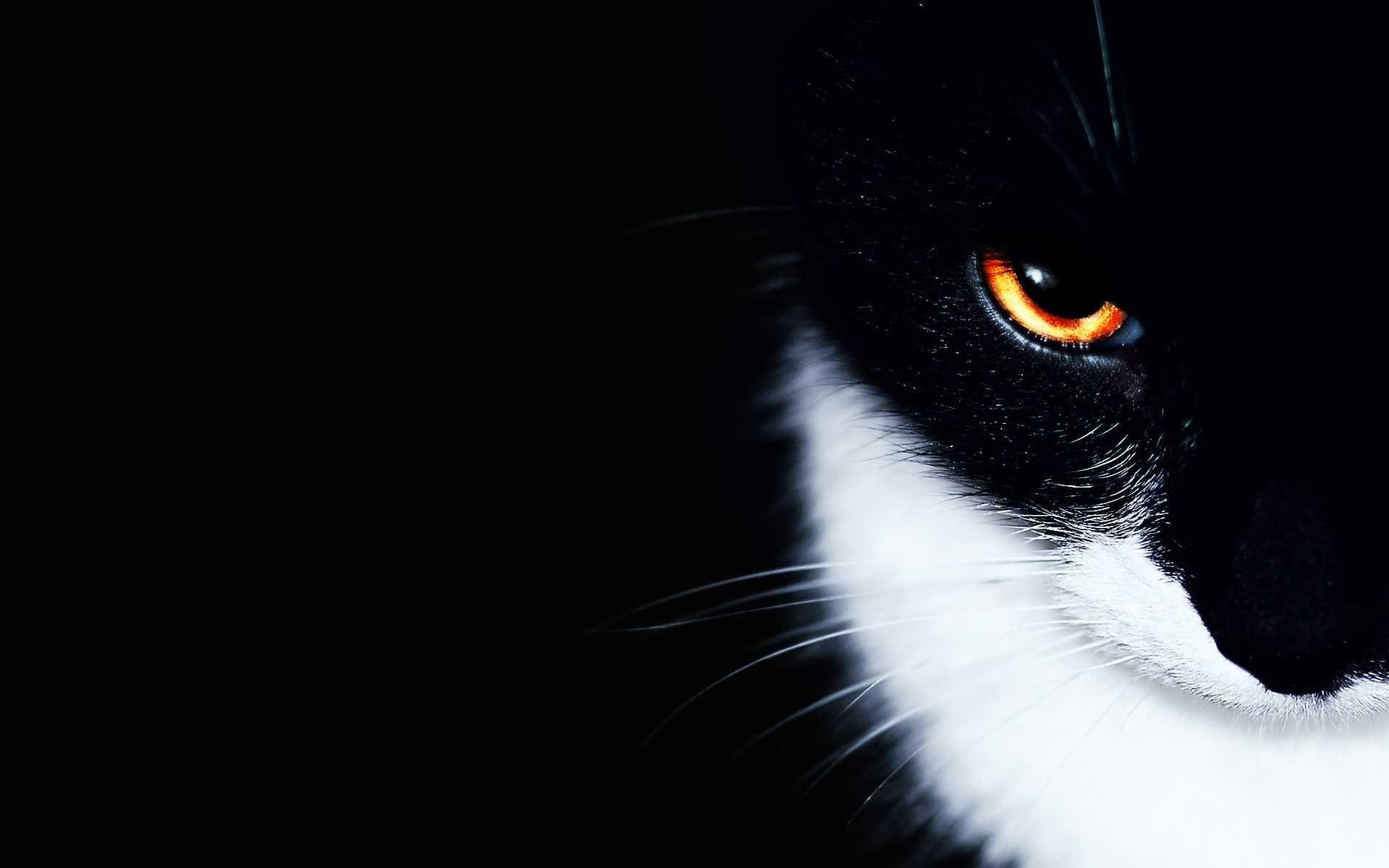 Black And White Cat Wallpapers   Wallpaper Cave Black And White Cat Wallpaper   Amazon Walls