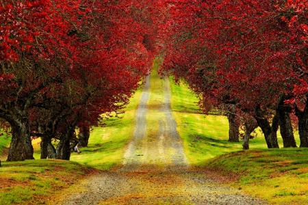 3D HD Nature Wallpapers For Mobile   Wallpaper Cave Red Trees Autumn Road Beautiful HD Wallpaper   HD Nature Wallpaper      Download