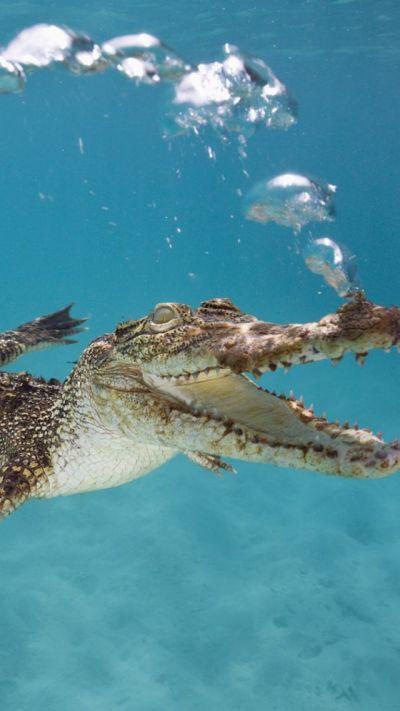Wallpaper Crocodile, Calf, Swim, Underwater, Bubbles ...