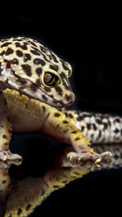 Wallpaper Gecko, reptile, lizard, caterpillar, close-up ...