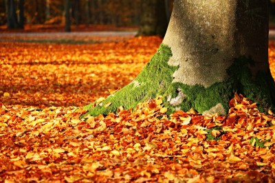 Wallpaper leaves, tree, autumn, 5k, Nature #15791