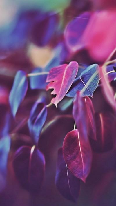 Wallpaper Leaves, 5k, 4k wallpaper, macro, purple, Nature ...