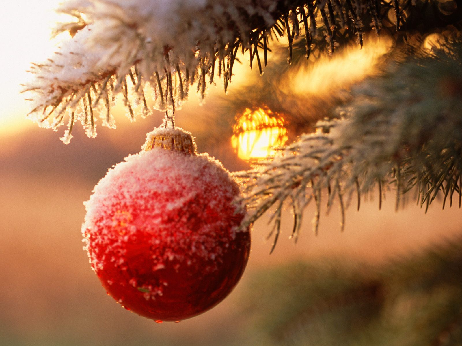 Snow Globes Animated Backgrounds Christmas