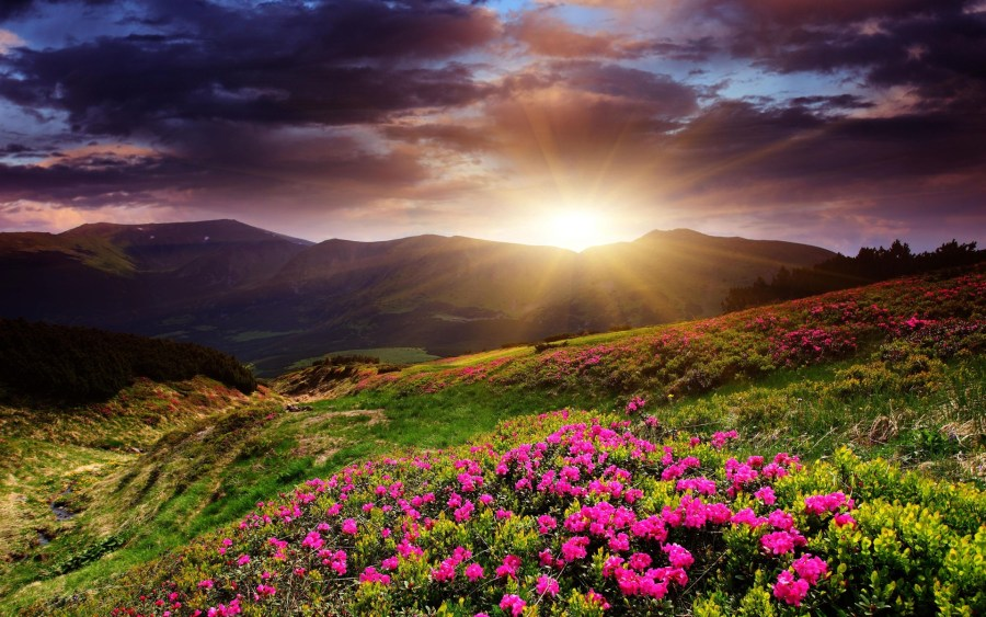 Pink Mountain Flowers wallpapers   Pink Mountain Flowers stock photos Image  Pink Mountain Flowers wallpapers and stock photos