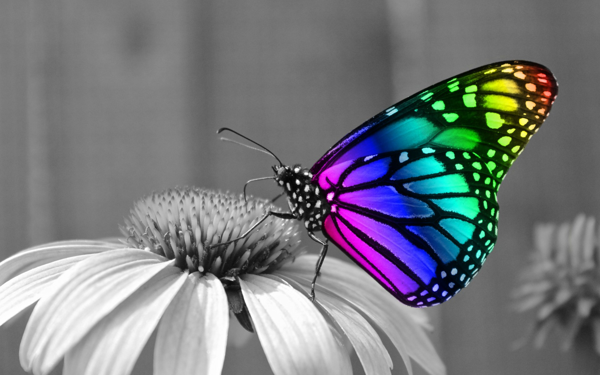 Rainbow Butterfly wallpapers   Rainbow Butterfly stock photos Image  Rainbow Butterfly wallpapers and stock photos