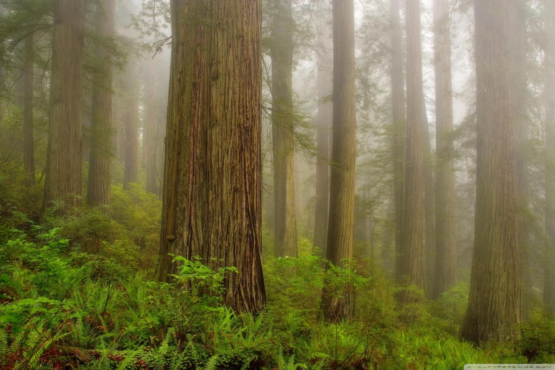 Redwood National Park 4k Hd Desktop Wallpaper For 4k Ultra