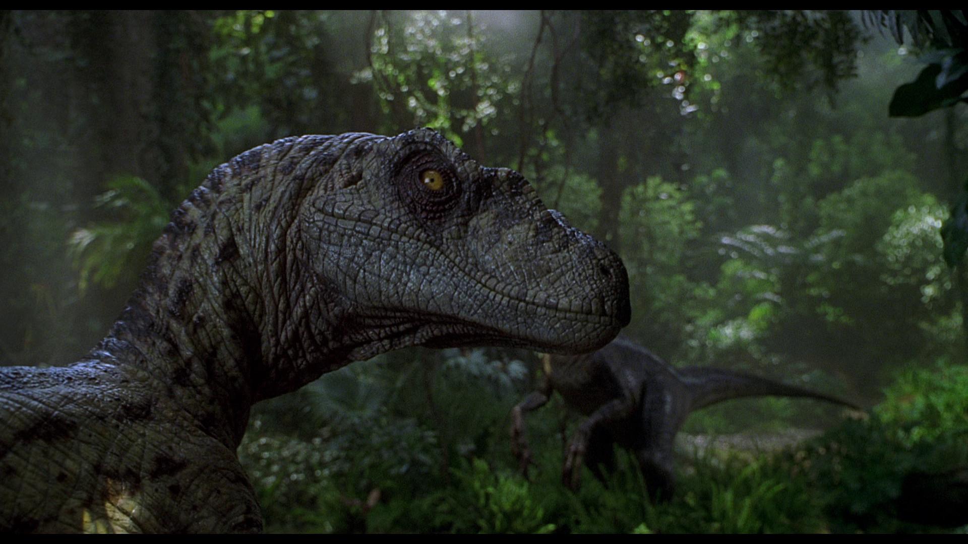 Raptor 1080p Dinosaur Wallpaper
