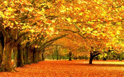 Fall desktop wallpaper ·① Download free awesome High ...