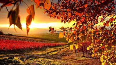 Autumn wallpaper HD ·① Download free wallpapers for ...