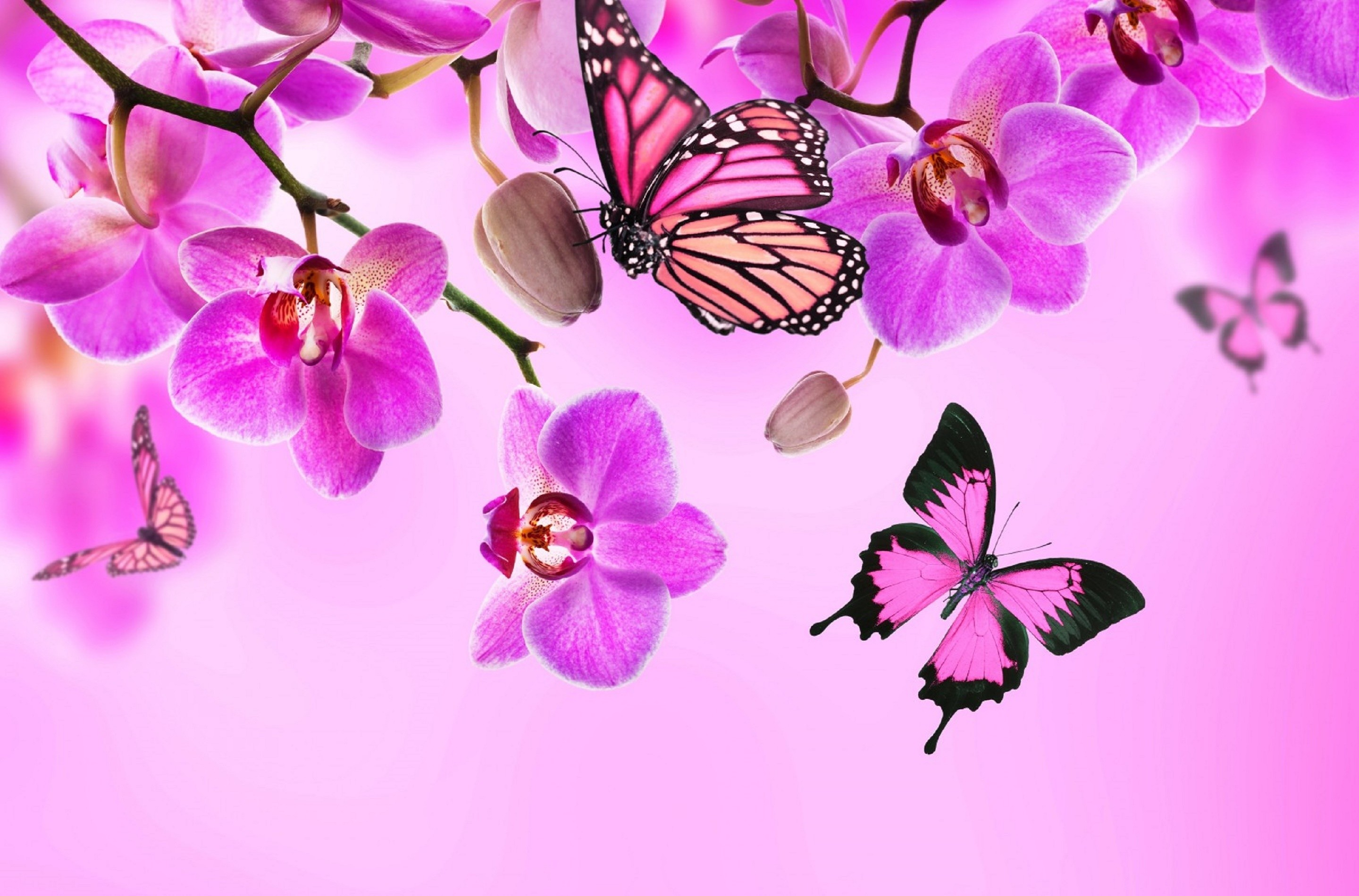 Pretty Butterfly Wallpaper            Animals